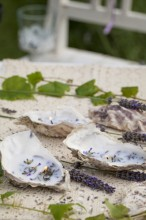 Fotografie květin, fotky květinových dekorací pro publikace na téma fotografie, květiny, kytky, dekorace, fotky, decoration, flower, garden, lavender, nobody, outdoor, shell, summer, tea candle, wax