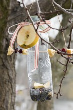 Fotografie květin, fotky květinových dekorací pro publikace na téma fotografie, květiny, kytky, dekorace, fotky, apple, bird, birds, bottle, feeder, feeding, fruit, garden, outdoor, pet, raisin, seed, winter