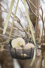 Fotografie květin, fotky květinových dekorací pro publikace na téma fotografie, květiny, kytky, dekorace, fotky, apple, bird, birds, feeder, feeding, garden, hang, metal dish, outdoor, ribbon, seed, winter