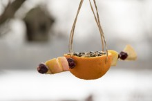 Fotografie květin, fotky květinových dekorací pro publikace na téma fotografie, květiny, kytky, dekorace, fotky, apple, bird, birds, feeder, feeding, fruit, garden, hang, orange, outdoor, raisin, seed, winter