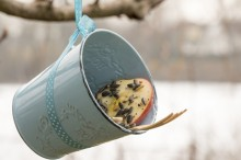 Fotografie květin, fotky květinových dekorací pro publikace na téma fotografie, květiny, kytky, dekorace, fotky, apple, bird, birds, feeder, feeding, fruit, garden, metal pot, outdoor, seed, winter