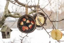 Fotografie květin, fotky květinových dekorací pro publikace na téma fotografie, květiny, kytky, dekorace, fotky, apple, bird, birds, coconut, feeder, feeding, garden, outdoor, seed, shell, winter