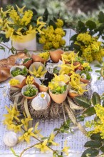 Fotografie květin, fotky květinových dekorací pro publikace na téma fotografie, květiny, kytky, dekorace, fotky, bakery, decoration, easter, egg, egg shell, flower, forsythia, garden, houseleek, mahonia, nobody, outdoor, shell, spring, wreath