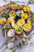 Fotografie květin, fotky květinových dekorací pro publikace na téma fotografie, květiny, kytky, dekorace, fotky, bakery, decoration, easter, egg, egg shell, flower, forsythia, garden, houseleek, nobody, outdoor, shell, spring, wreath