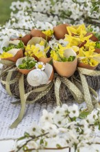 Fotografie květin, fotky květinových dekorací pro publikace na téma fotografie, květiny, kytky, dekorace, fotky, bakery, cherry branch, decoration, easter, egg, egg shell, flower, forsythia, garden, houseleek, nobody, outdoor, shell, spring, wreath